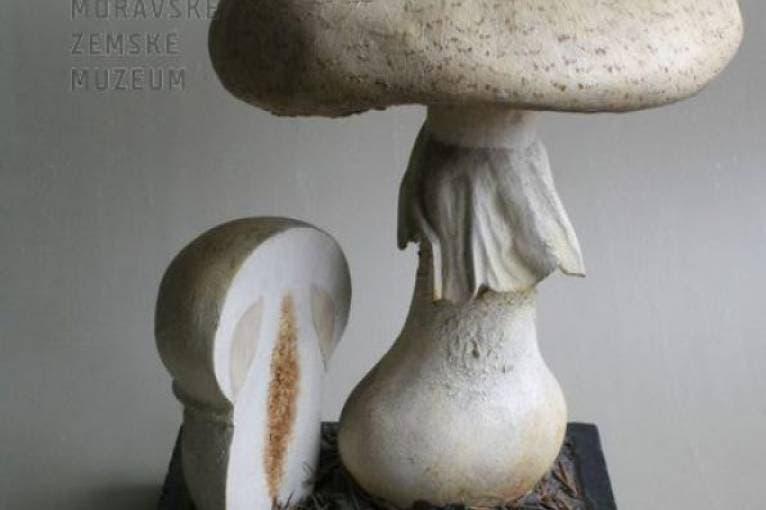 Mushrooms Models by Josef Rulíšek