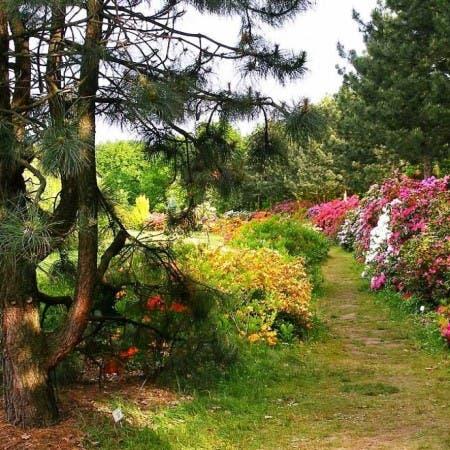 The Botanical Garden in Powsin