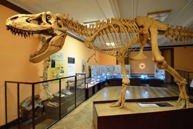 Stała ekspozycja Muzeum Ewolucji PAN