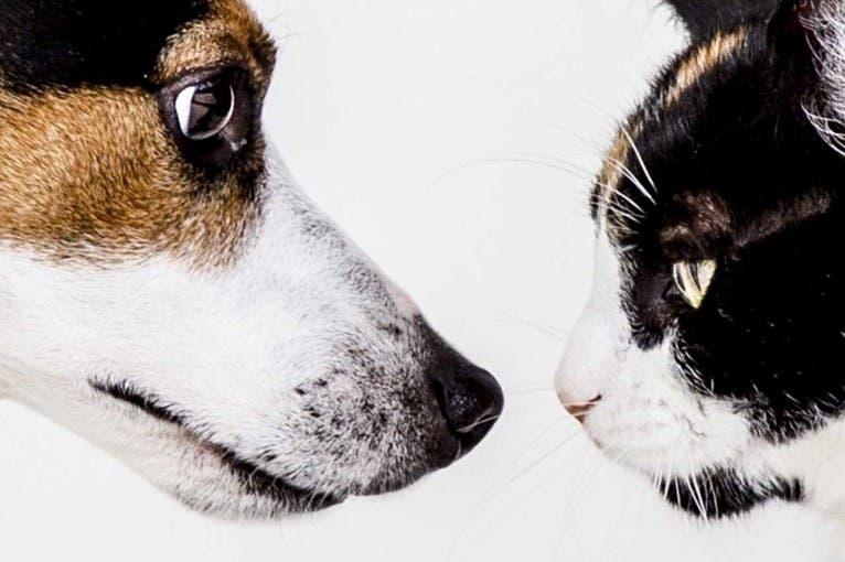 Targi dla zwierzaków