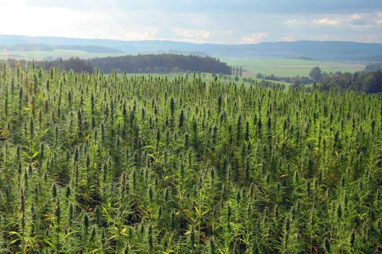 Úvodní konference Cannabis war is over!