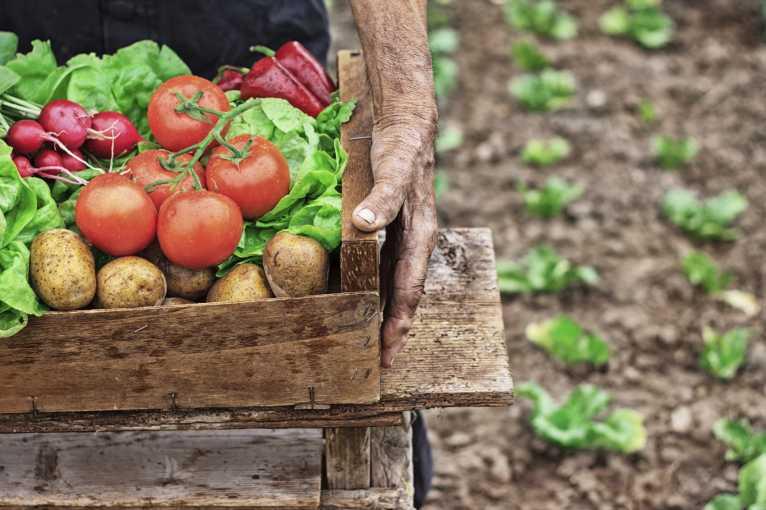 Sustainable: Potraviny v jiném světle
