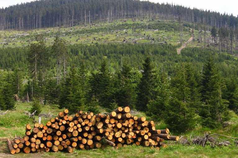 Lesníkův rok