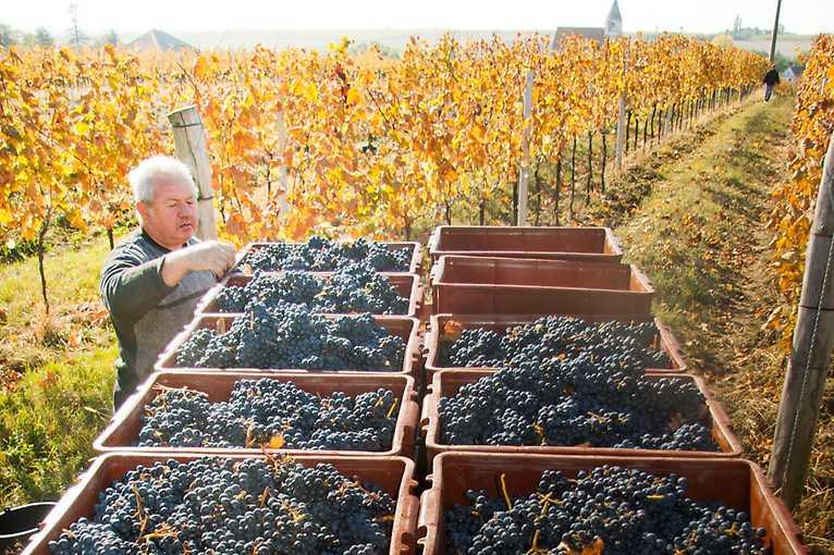 Degustace s vinařstvím Josef Kořínek