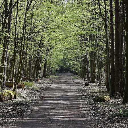 Kabacki Forest