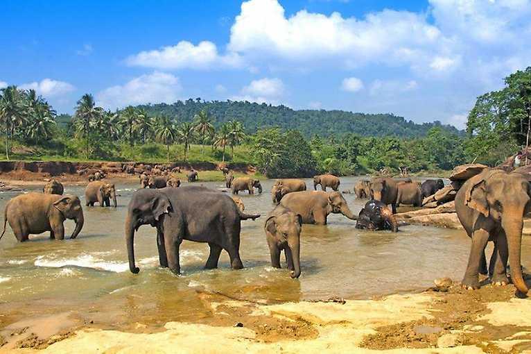 Věra Kusá: Srí Lanka – země slonů a čajových plantáží