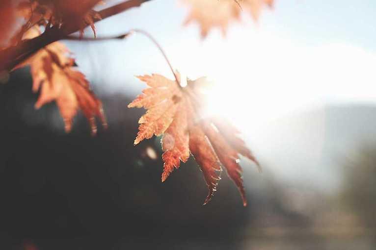Jesienny spacer przyrodniczy