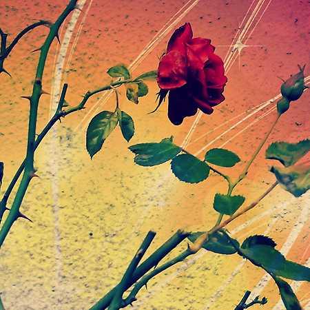 O Šípkové Růžence