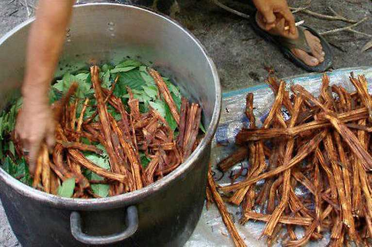 Science Meets Tradition: Jaký efekt na psyché má Ayahuasca?