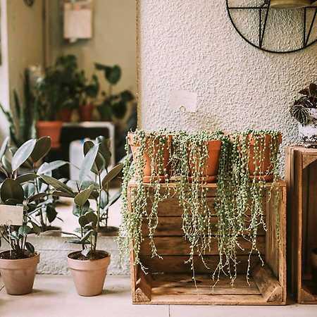 Roślinny STOR