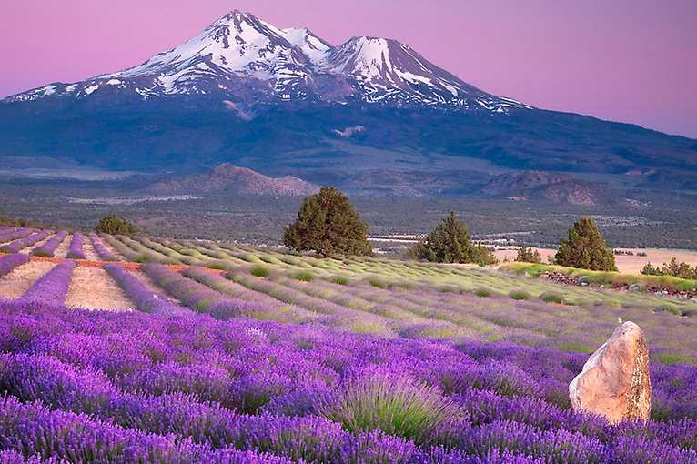 Do Provence stopem
