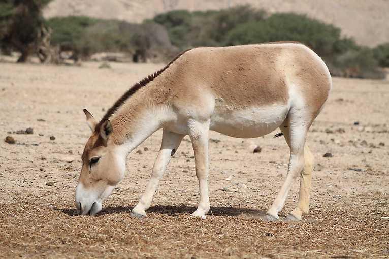 Zoologická expedice do Izraele a Ománu