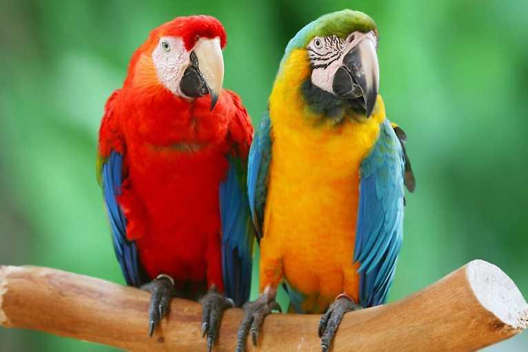Exotické ptactvo, morčata a další chované zvířata