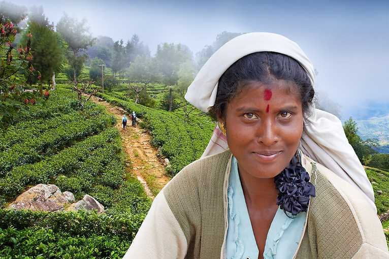 Martin Loew: Srí Lanka – ostrov čaje a slonů