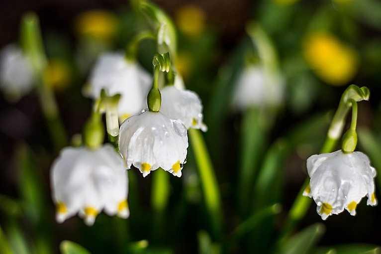 Jak Martin sBarborkou vítali jaro