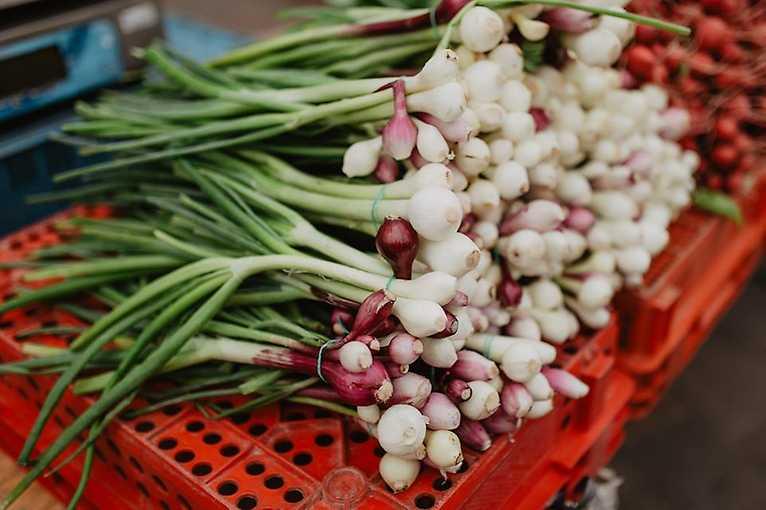 Plzeňské farmářské trhy 2019