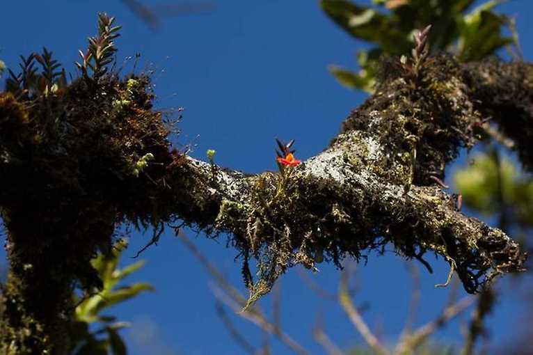 Jan Ponert: Za orchidejemi Ekvádorských hor