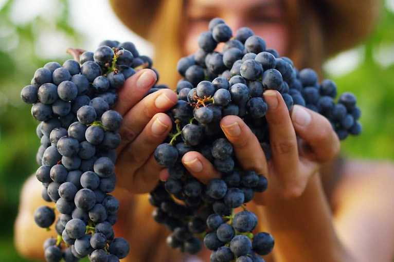Roudnické vinobraní 2019