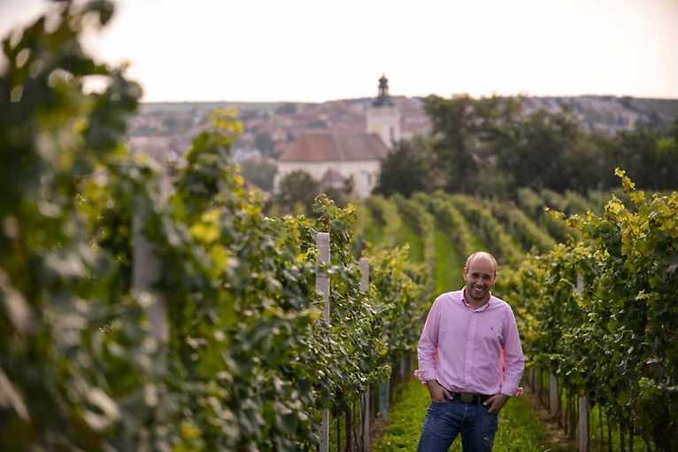 Degustace Vín Vinařství Šoman Dolní Dunajovice