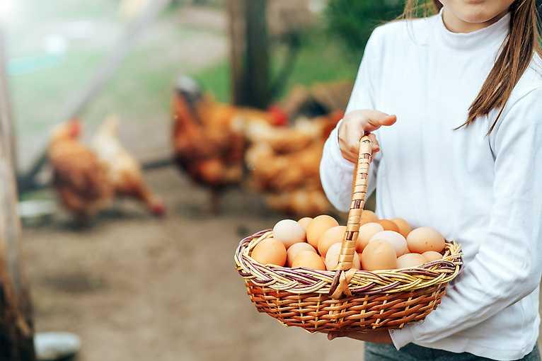 Lokální hostina: Společné vaření s Živou farmou a Hnutím Duha
