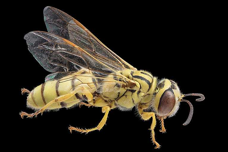 Bees, Wasps, Ants – A Collection Opens Up