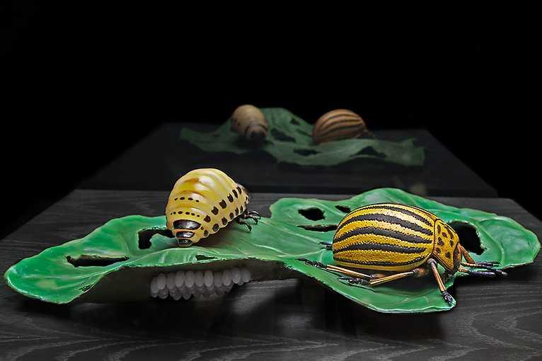 Kellers Insektenmodelle