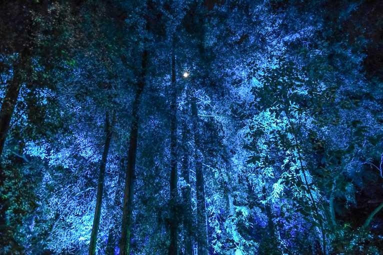Noc v kouzelném lese