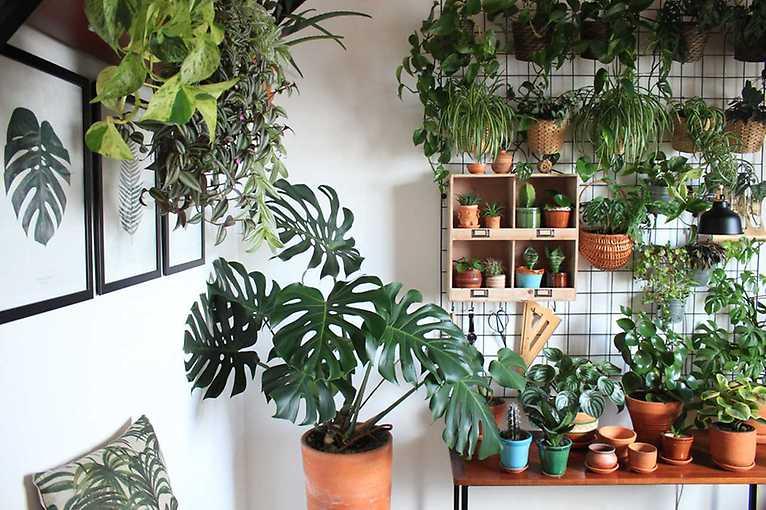 Rooftop Talks: Fenomén pokojových rostlin