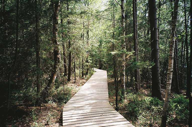 Den za obnovu lesa 2019