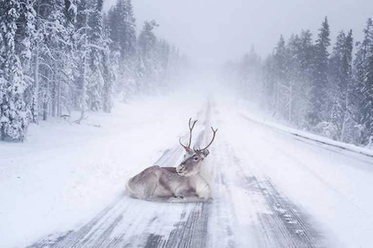 Helena Křenková: Laponsko na lyžích