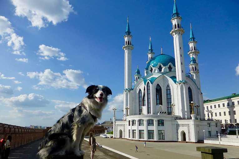 Slávek Král: Travel stand-up – Stopem se psem v Asii