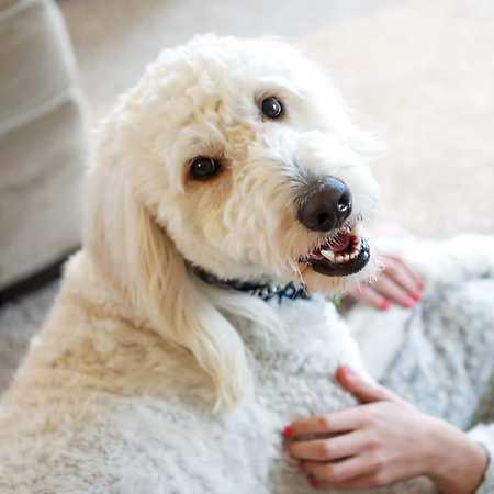 Pejskárium 2019 – Mise: Šťastný pes