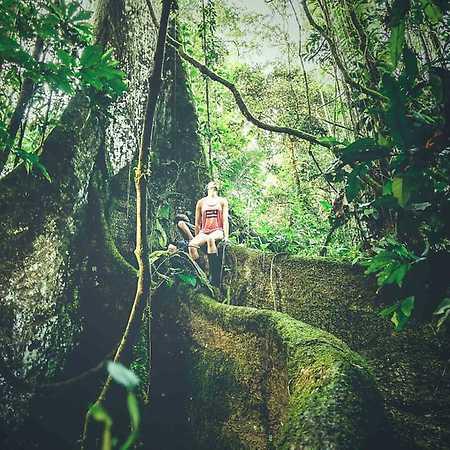 Forest.ink 2: Viva la Amazonia