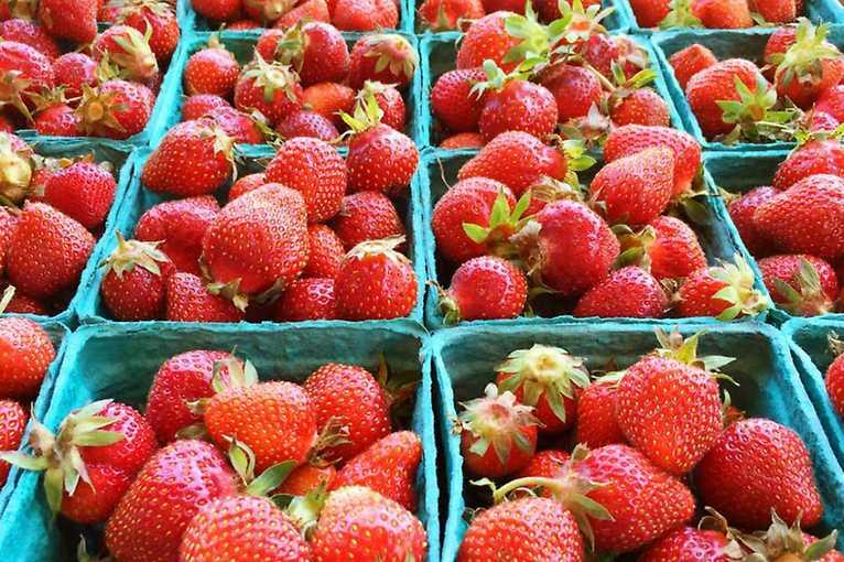 Farmářské trhy na Tyláku 2020
