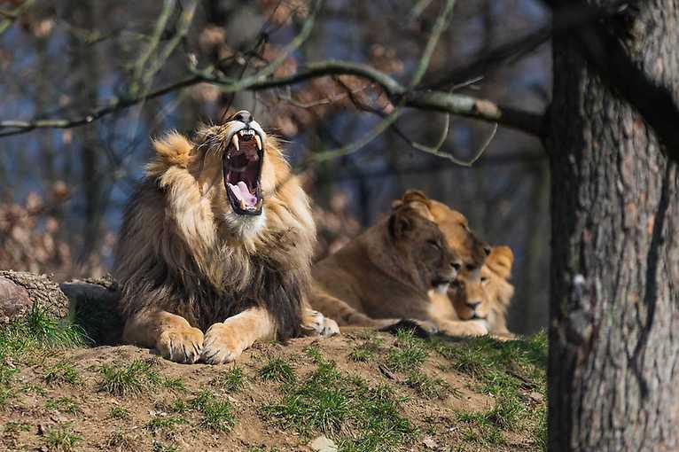 Znovuotevření Zoo Brno