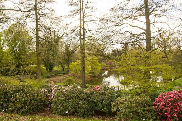Aktuálně atraktivní dřeviny a trvalky s důrazem na jejich uplatnění v zahradách a parcích