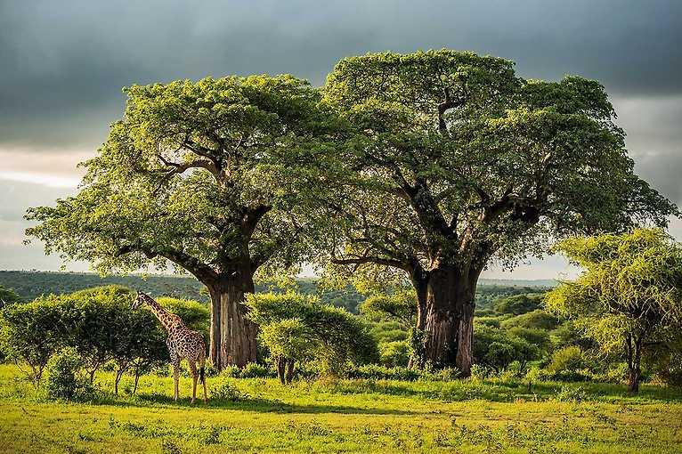 Online stream: Tanzanie  – poprvé v Africe! – Pavel Svoboda