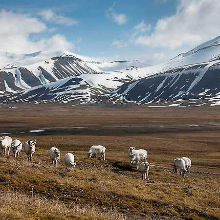 Roman Siegl: Špicberky aneb K severnímu pólu za ledním medvědem