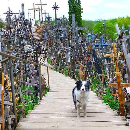 Slávek Král: Cestování se psem po Evropě