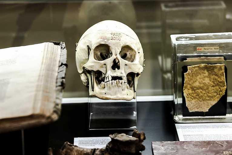 Korona v Muzeu