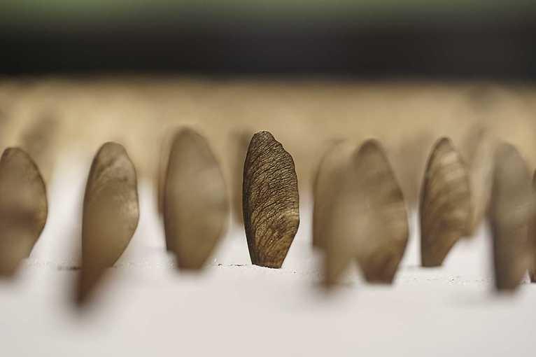 Botaniczne poszukiwania: Sztuka botaniczna w XXI wieku