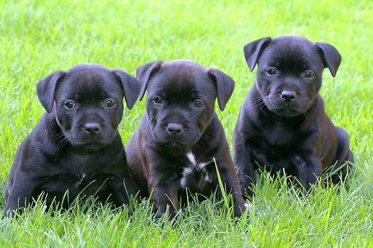 Reprodukce psů: Nejčastější důvody nezabřezávání, možnosti řešení