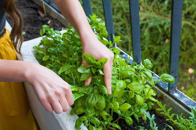 Balkón ako záhradka