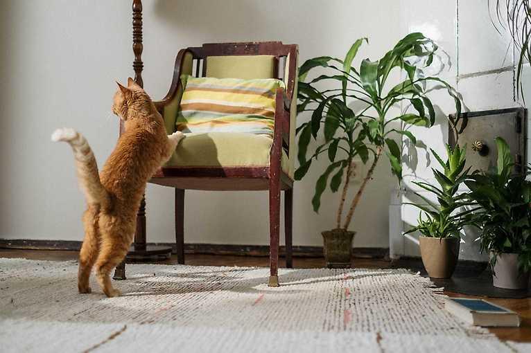 Plants vs. pets