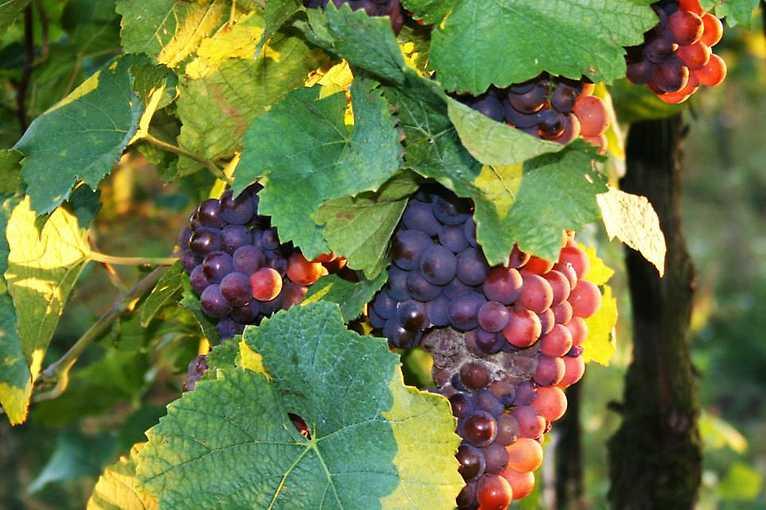 Víno zblízka: Večer sEkovínem