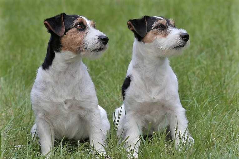 Genetika a chov psů v praxi