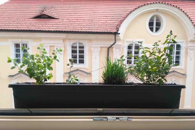 Pěstování na balkóně i za oknem