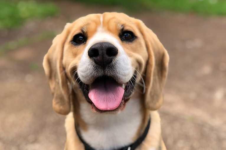 Ružinovský psí miláčik