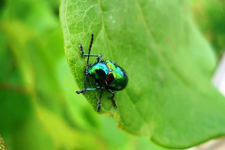 Mezní exkurze za hmyzem ve městě