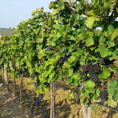 Vinná stezka aka Trojkou za vínem